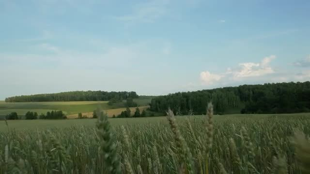 Walking Through A Field: Stock Video