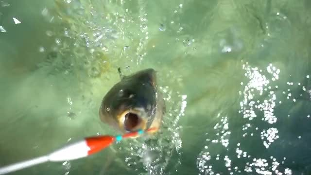 Fish On A Hook: Stock Video