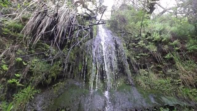 Waterfall In The Forest: Stock Video