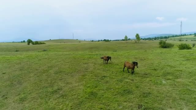 Two Horses On A Field: Stock Video