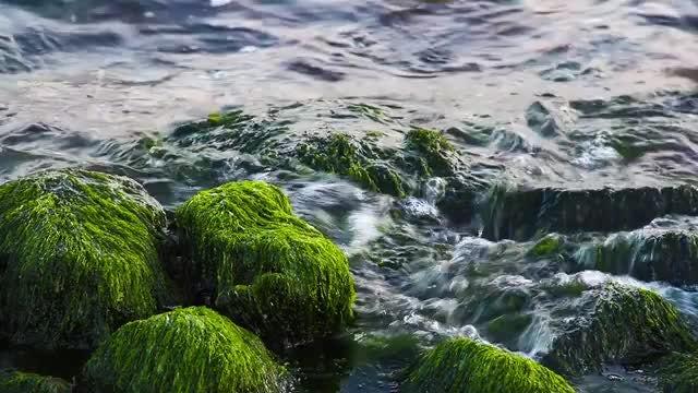 Green Algae On Ocean Rocks: Stock Video