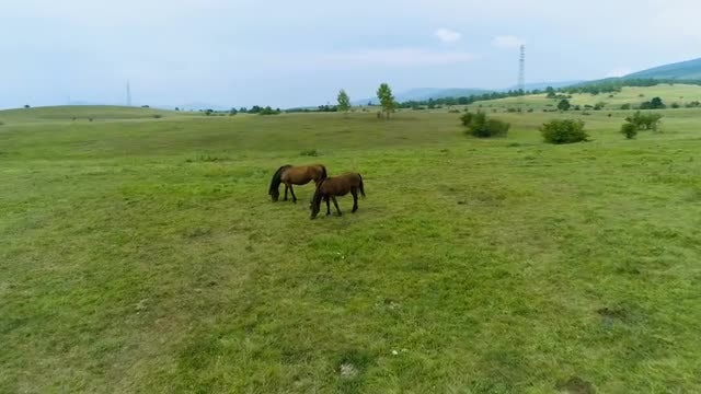 Horses In The Field Grazing: Stock Video