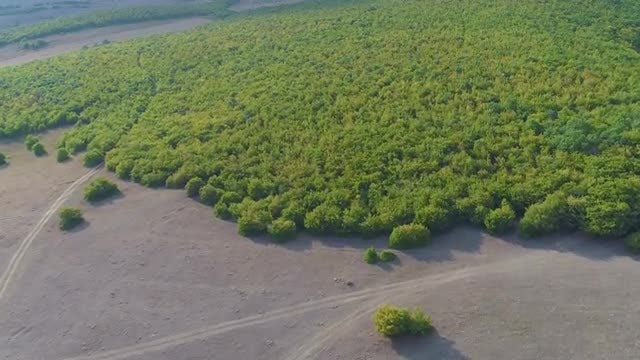 Aerial View Of A Forest: Stock Video