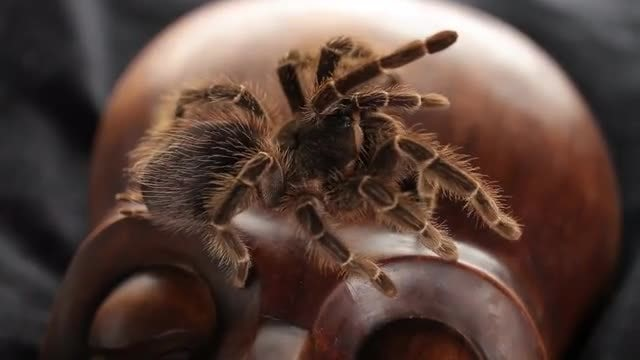 Spider Crawling On Ancient Mask: Stock Video