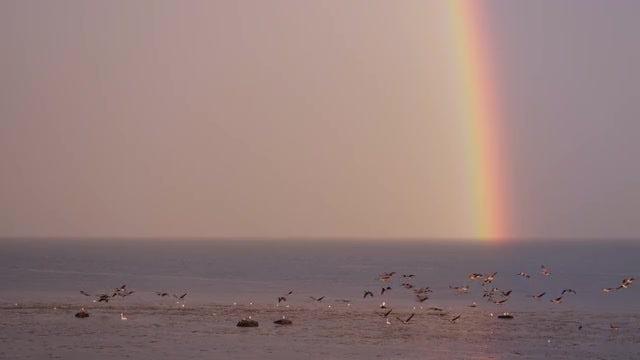 Rainbow: Stock Video
