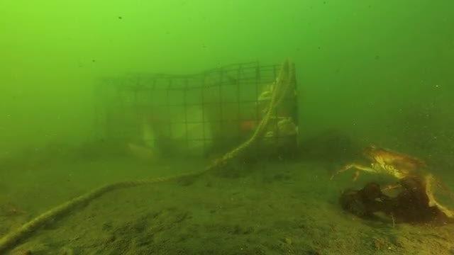 Underwater Crab Cage: Stock Video