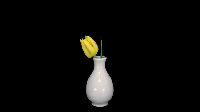 Yellow Tulip In A Vase: Stock Video