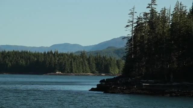 Dolly Shot Of Island Forest: Stock Video