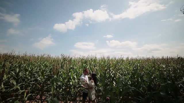 Lovers In The Corn Field: Stock Video