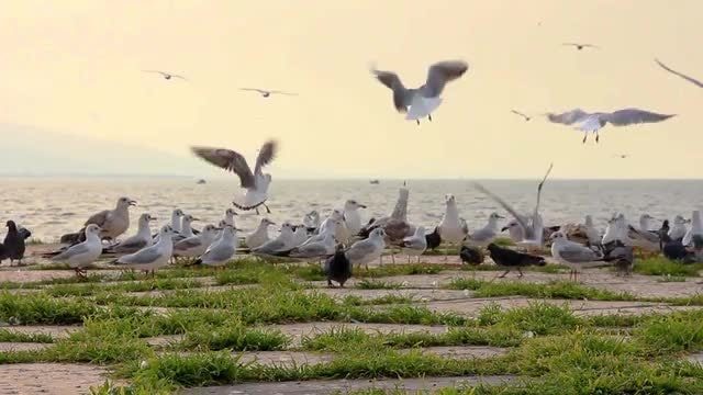 Seabirds Flying Near The Ocean: Stock Video