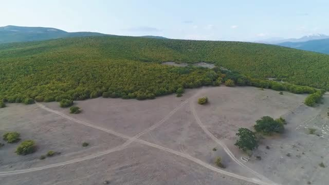 Aerial Shot Of Autumn Forest: Stock Video
