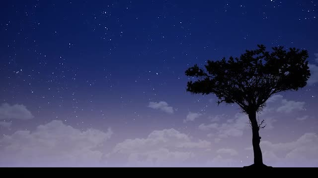 Tree Silhouette At Night: Stock Motion Graphics