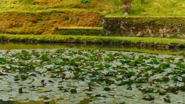 Water Lilies And Giant Ferns: Stock Video