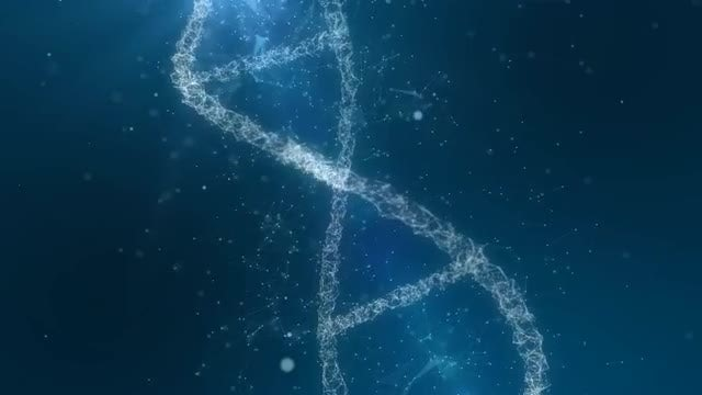 Molecular Human DNA Animation: Stock Motion Graphics