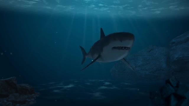 Great White Shark Passing Through: Stock Motion Graphics