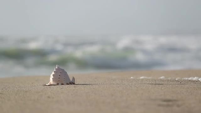 Seashell On An Empty Beach: Stock Video