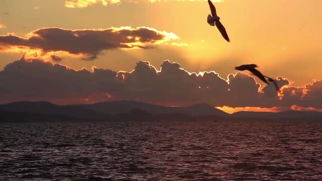 Sunset Birds: Stock Video