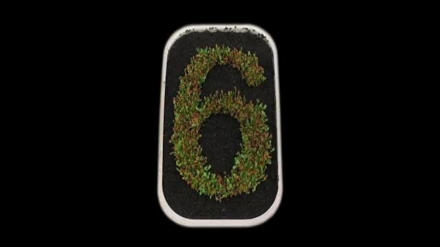 Sprouts Forming The Number Six: Stock Video