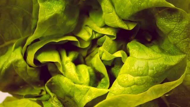 Closeup Of Lettuce: Stock Video