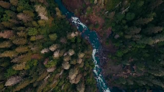 Aerial Over A Forest River And Bridge: Stock Video