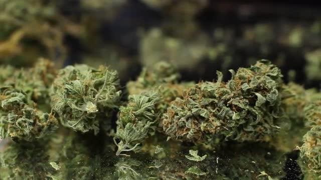 Dry Marijuana Buds And Leaves: Stock Video