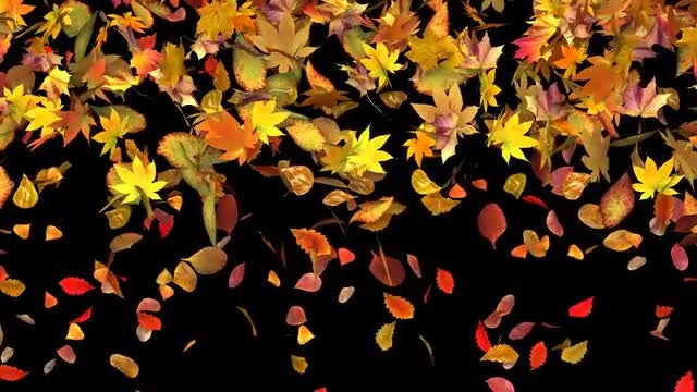 Autumn Leaves Fall: Stock Motion Graphics