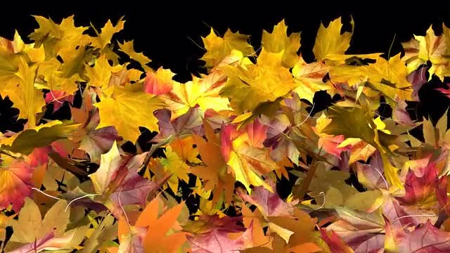 Autumn Leaves Fall Transition: Stock Motion Graphics
