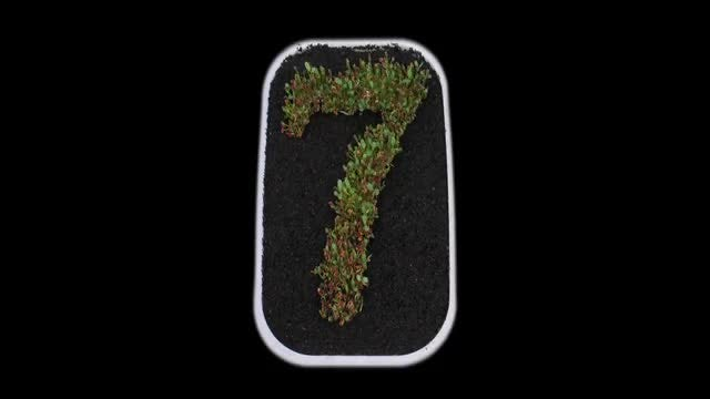 Seeds Growing Forms Number 7: Stock Video