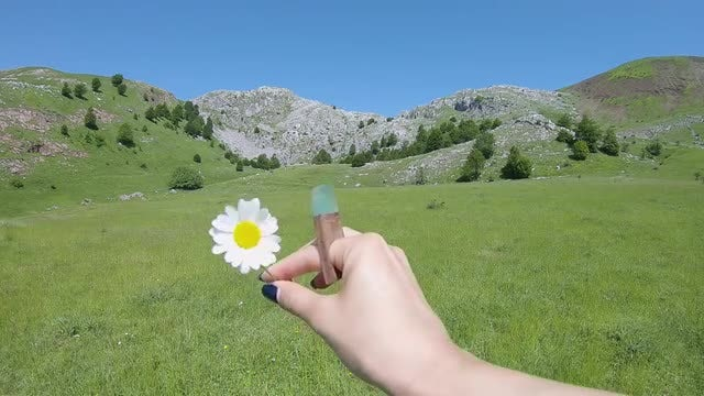 Hand Playing With A Flower: Stock Video