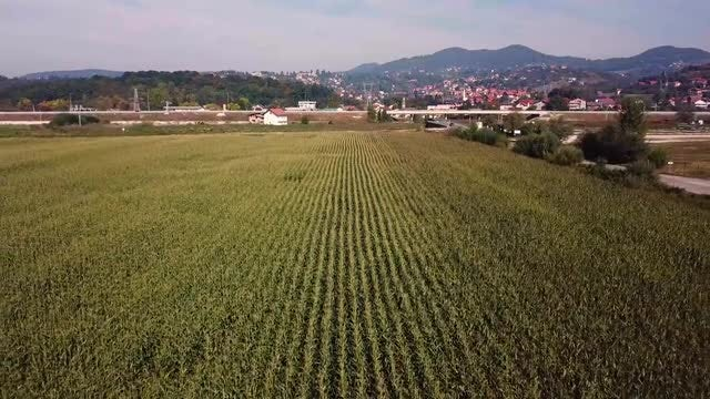Aerial View Of Corn Field: Stock Video