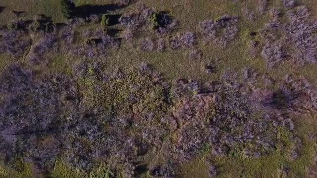 Colorful Nature Aerial Top View: Stock Video