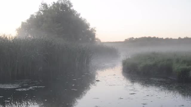 Expansive Swamp With White Fog: Stock Video