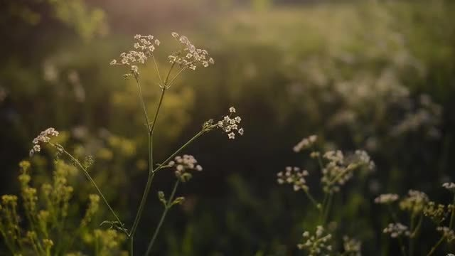 Weeds Swaying In The Wind: Stock Video