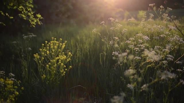 Green Meadow In The Setting Sun: Stock Video