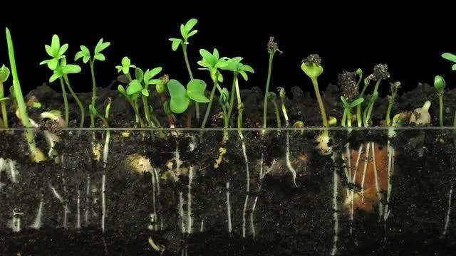 Vegetables Germinating: Stock Video