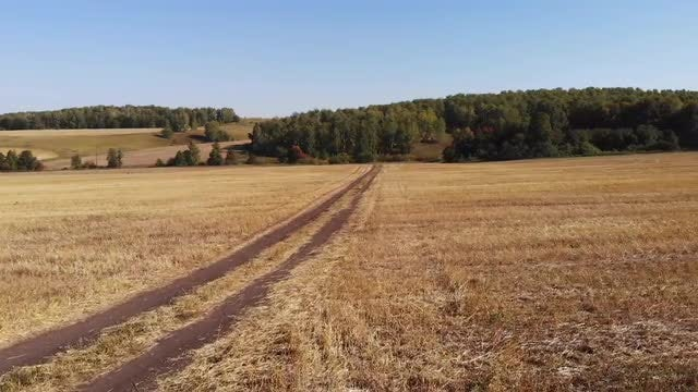 Tracking Shot Of Dry Grassland: Stock Video
