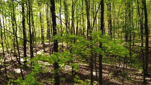 Panning Shot Of Tree Trunks: Stock Video
