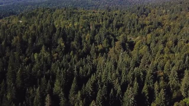 Aerial Shot Of Large Forest: Stock Video