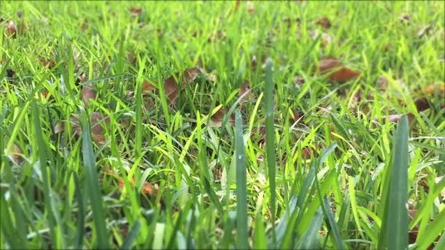 Panning Shot Of Backyard Lawn: Stock Video