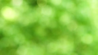 Green Defocussed Background: Stock Video