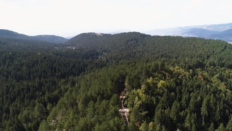 Aerial Shot Of A Forest: Stock Video