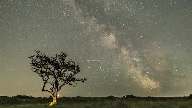 Milky Way And Tree: Stock Video