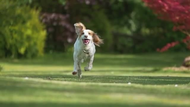 Dog Running In Slow Motion: Stock Video