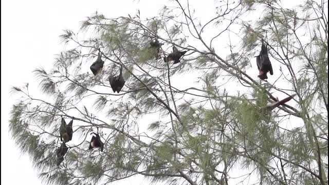 Bats Up A Tree: Stock Video