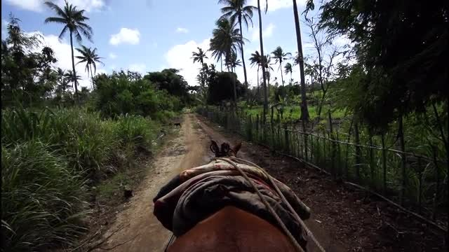 POV Of Donkey Pulling Carriage: Stock Video