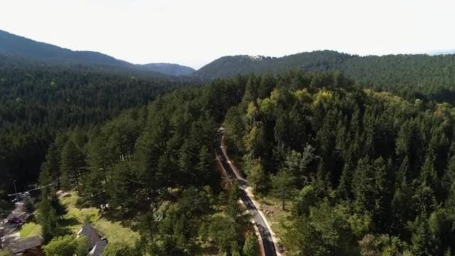 Aerial Shot Of Forest Road: Stock Video