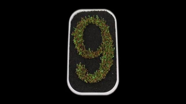 Time-lapse of Growing Number 9: Stock Video