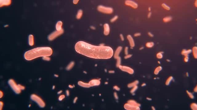 Floating Bacteria 3D Animation: Stock Motion Graphics