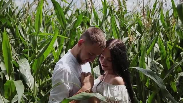 Young Couple In Corn Field: Stock Video