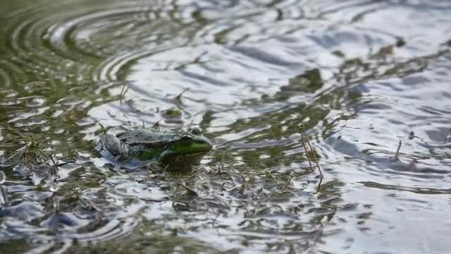 Frog Sits While It Rains: Stock Video